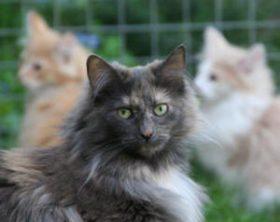 Elke met kittens Noortje